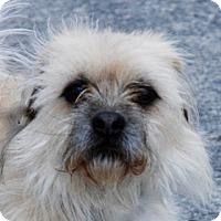 Adopt A Pet :: Joe - Portola, CA