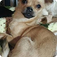 Adopt A Pet :: Pebbles - Anderson, SC