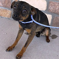Adopt A Pet :: Todd - Artesia, NM