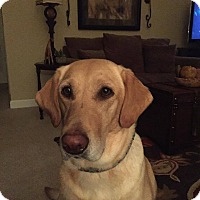 Adopt A Pet :: Chloe - Huntsville, AL