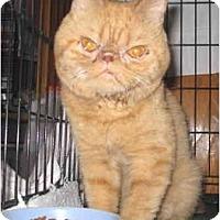 Adopt A Pet :: Tabasco - Mesa, AZ