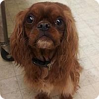 Adopt A Pet :: Maxie - Cumberland, MD