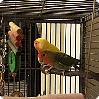 Adopt A Pet :: Angel & Sprattle - Lexington, GA