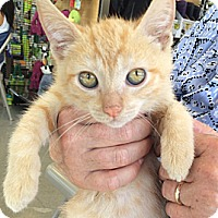 Adopt A Pet :: Kira - Santa Monica, CA