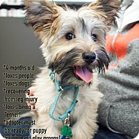 Adopt A Pet :: Morocco - New York, NY