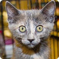 Adopt A Pet :: Tasha - Irvine, CA