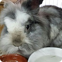 Adopt A Pet :: Pammie - Williston, FL