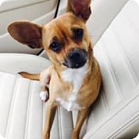 Adopt A Pet :: Sage (courtesy listing) - Beavercreek, OH