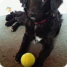 Adopt A Pet :: Miffie