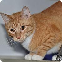 Adopt A Pet :: Tommy - Ottumwa, IA