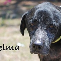 Adopt A Pet :: Selma - Minneola, FL