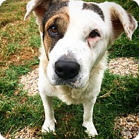 Adopt A Pet :: Remi - Fredericksburg, TX