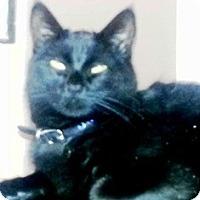 Adopt A Pet :: Lucy - Pasadena, CA