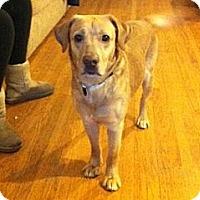 Adopt A Pet :: Rudy - Hamilton, ON