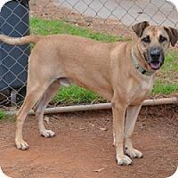 Adopt A Pet :: Metcalf - Athens, GA