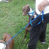 Adopt A Pet :: Thelma / Louise - North, VA