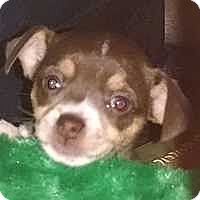 Adopt A Pet :: Wiggy - Columbus, OH