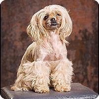 Adopt A Pet :: Cindy lou - Owensboro, KY