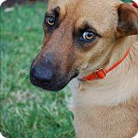 Adopt A Pet :: Chelsea - Richmond, VA