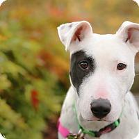 Adopt A Pet :: Presley - Portland, OR
