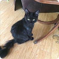 Adopt A Pet :: Chester - Roseburg, OR