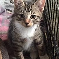 Adopt A Pet :: Alex - McKinney, TX