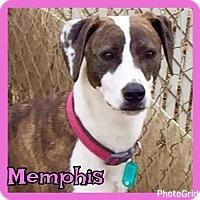Adopt A Pet :: Memphis - Jasper, IN