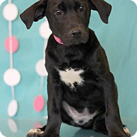 Adopt A Pet :: Buttercup - Waldorf, MD