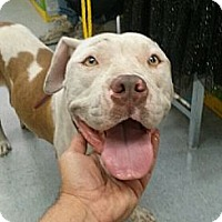 Adopt A Pet :: Hazel - Hollywood, FL