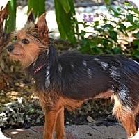 Adopt A Pet :: Lila - Beechgrove, TN