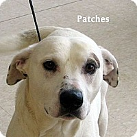 Adopt A Pet :: patches - Ludington, MI