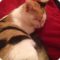 Adopt A Pet :: Beru - Simpsonville, SC