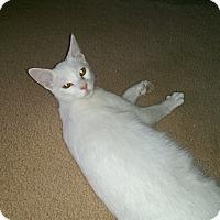 Adopt A Pet :: Lucius - Naples, FL