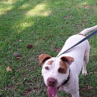 Adopt A Pet :: Tazzie - Washington, GA