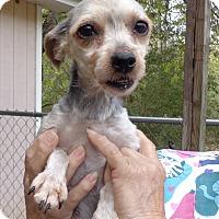 Adopt A Pet :: Heidi - Crump, TN