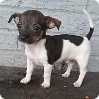 Adopt A Pet :: Kingston - Bridgeton, MO