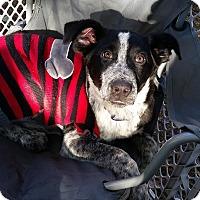 Adopt A Pet :: SUNNY - Cleveland, MS