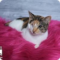 Adopt A Pet :: Kendra - Tomball, TX