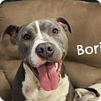 Adopt A Pet :: Boris - Melbourne, KY
