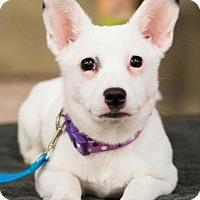 Adopt A Pet :: DOT - Modesto, CA