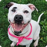 Adopt A Pet :: Chloe - Wilmington, DE