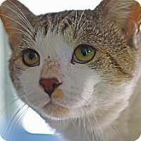 Adopt A Pet :: Johnny - Lombard, IL