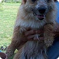 Adopt A Pet :: Kissie - Hilham, TN