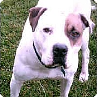 Adopt A Pet :: Jake - Gainesboro, TN