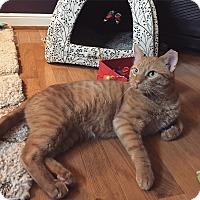 Adopt A Pet :: Flynn - Colmar, PA