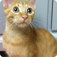 Adopt A Pet :: Paddington - Trevose, PA