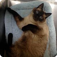 Adopt A Pet :: Max - Newport Beach, CA