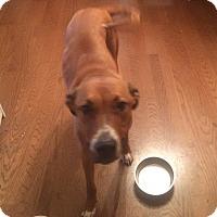Adopt A Pet :: Winston - Nuevo, CA