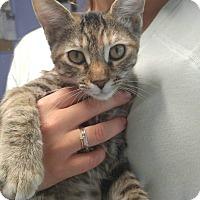 Adopt A Pet :: CARRIE - Cleveland, TN