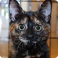 Adopt A Pet :: Starla - Irvine, CA